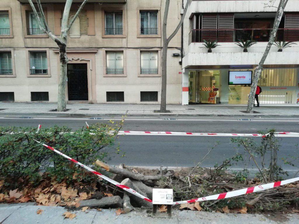 Zaragoza en Común denuncia que el gobierno PP-Cs ha talado sin justificación un árbol singular
