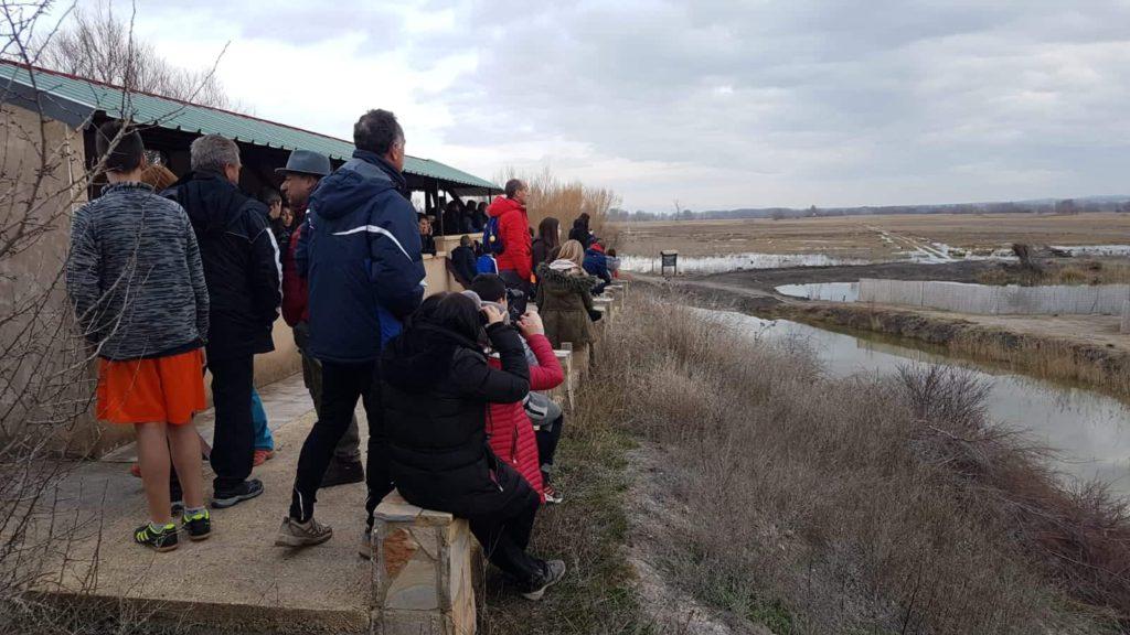 La observación de grullas se consolida como atractivo turístico en el sur de Aragón